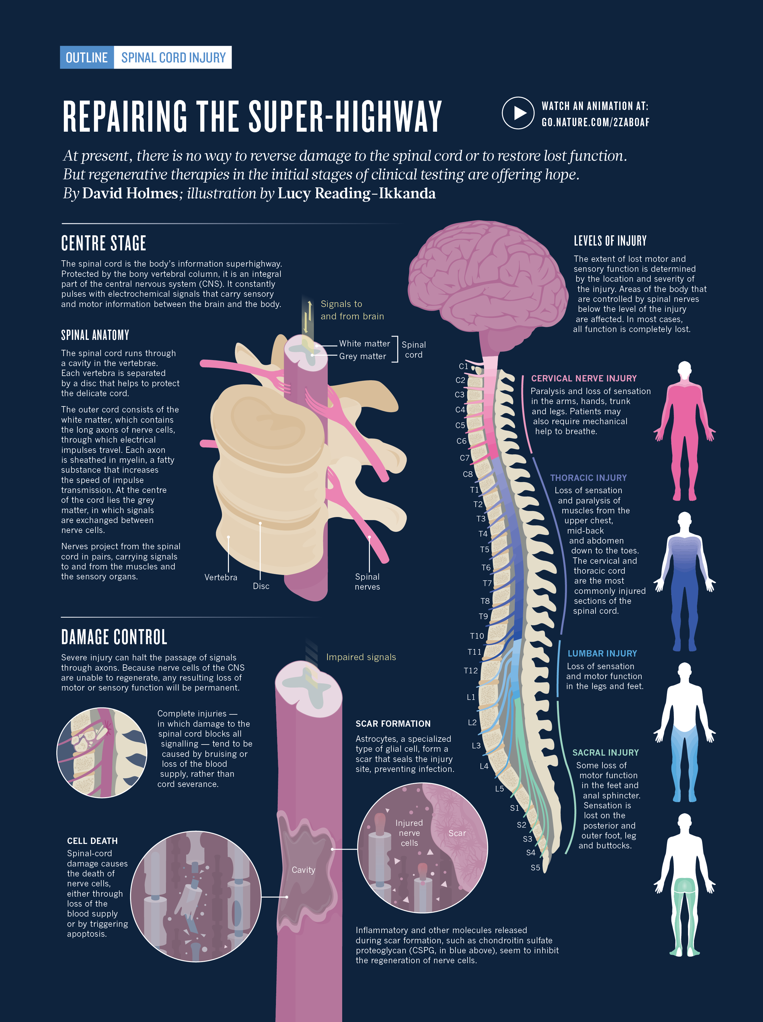 spinal cord injury patientsa - HD2533×3392